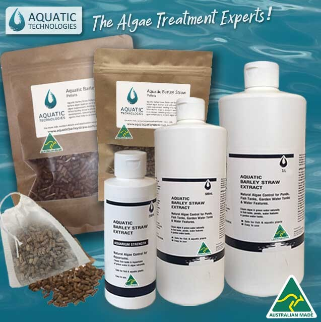 aquatic_barley_straw_for_aquarium_algae