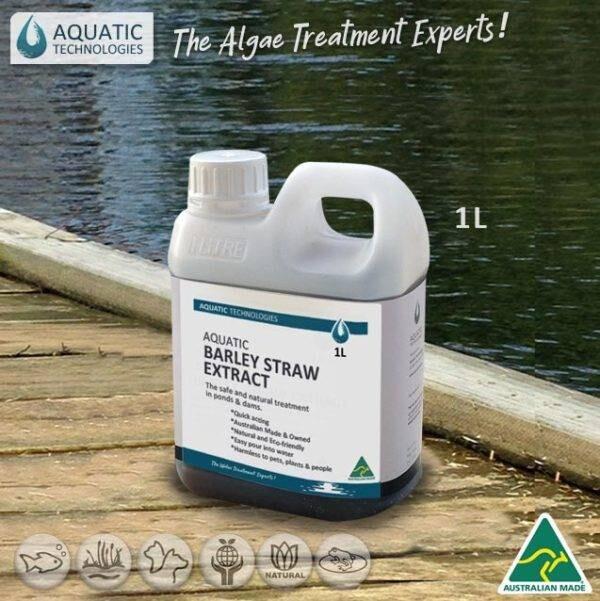 Aquatic Barley Straw for water clarity
