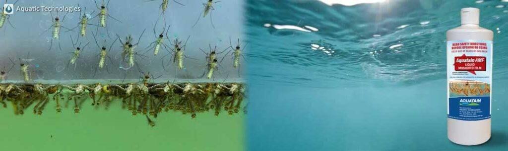 AMF film eradicates mosquitoes